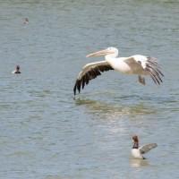 Parc des Oiseaux Villars les Dombes