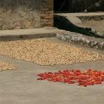environs de Yangshuo - séchage de piments et de cacahuettes