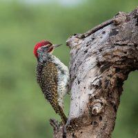 Oiseaux variés du Kenya