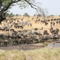 Faune terrestre de Tanzanie