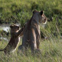 Mère et son petit - Kenya