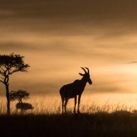 L'environnement du safari